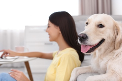Young woman and her Golden Retriever dog in living room