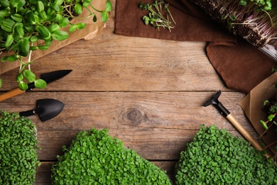 Fresh organic microgreens and gardening tools on wooden table, flat lay. Space for text