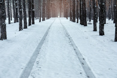 Car tire tracks on fresh snow in forest