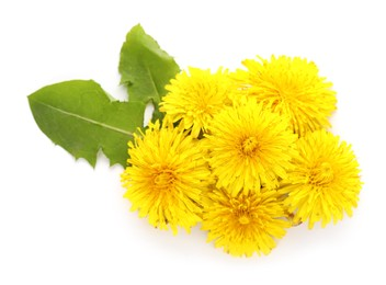 Beautiful yellow dandelions with leaves on white background, top view