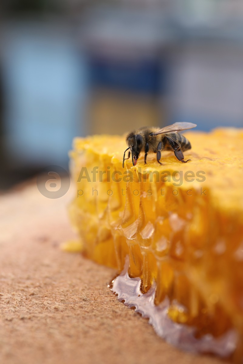 Piece of fresh honeycomb with bee on wood stump against blurred background, closeup