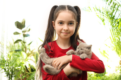 Portrait of girl holding Scottish straight baby cat on blurred background