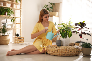 Young woman watering Dieffenbachia plant at home. Engaging hobby