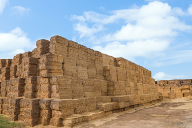 Many cereal hay bales outdoors. Agriculture industry