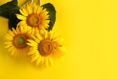 Beautiful bright sunflowers on yellow background, flat lay. Space for text