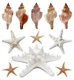 Collection of different beautiful sea stars and shells on white background