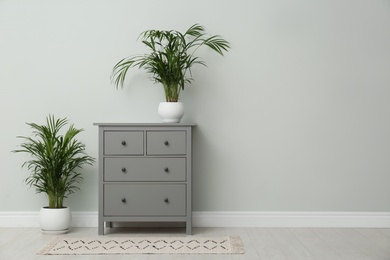 Exotic house plants and chest of drawers near grey wall. Space for text