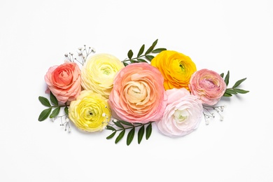 Beautiful ranunculus flowers on white background, top view