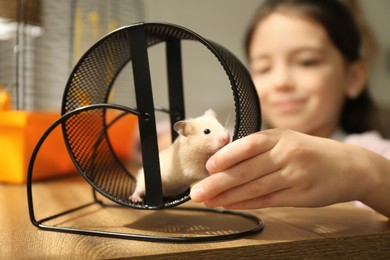 Little girl watching her hamster playing in spinning wheel at home, focus on hands