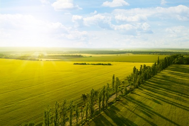 Beautiful aerial view of green fields and road on sunny day