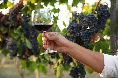Man holding glass of wine in vineyard on sunny day, closeup