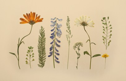 Pressed dried flowers and plants on beige background, flat lay. Beautiful herbarium