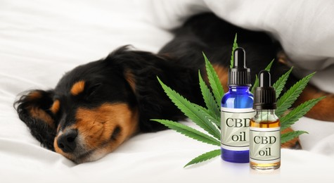 Bottles of CBD oil and cute dog sleeping on white fabric