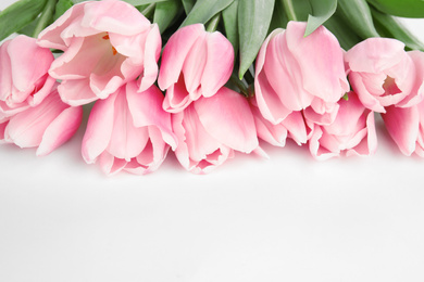 Beautiful pink spring tulips on white background, closeup
