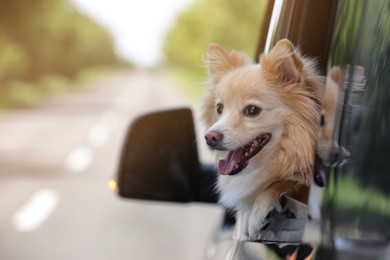 Cute dog peeking out car window, space for text