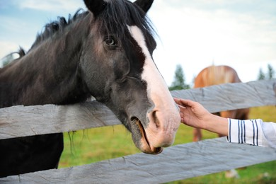 Woman stroking beautiful horse near wooden fence outdoors, closeup. Lovely domesticated pet