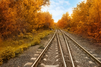 Beautiful view of autumn forest crossed by railway