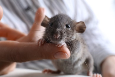 Woman with cute small rat on sofa, closeup view