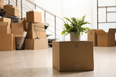Cardboard box with houseplant in new office, space for text. Moving day