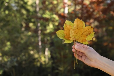 Woman holding beautiful leaves outdoors on autumn day, closeup. Space for text