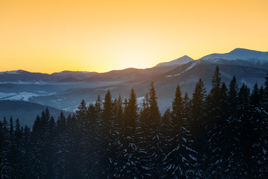 Beautiful mountain landscape with forest in winter