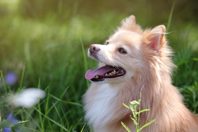 Cute dog in park on sunny day, space for text