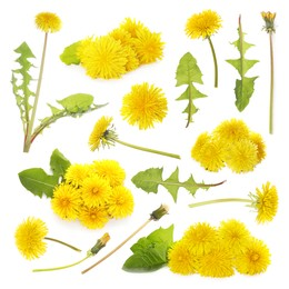Set with beautiful yellow dandelions on white background