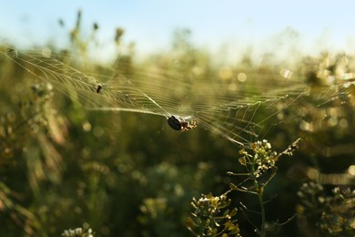 Spider spinning cobweb in meadow on sunny day