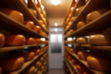 Blurred view of factory warehouse with fresh cheese heads on racks