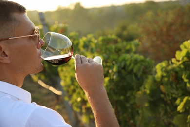 Handsome man tasting wine in vineyard on sunny day, closeup