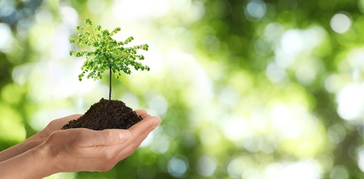 Woman holding pile of soil with small tree on blurred green background, closeup. Eco friendly lifestyle