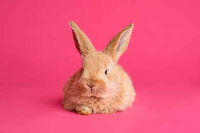 Adorable furry Easter bunny on color background