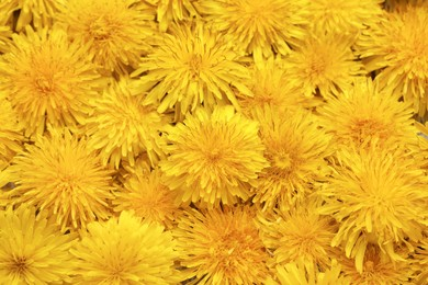 Beautiful yellow dandelions as background, top view