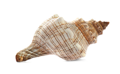 Beautiful exotic sea shell isolated on white