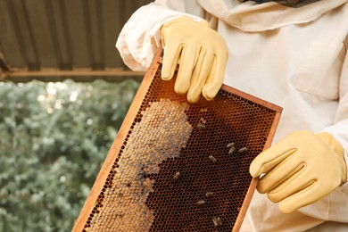 Beekeeper in uniform with honey frame at apiary, closeup
