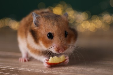 Cute little hamster eating piece of apple on wooden table, closeup