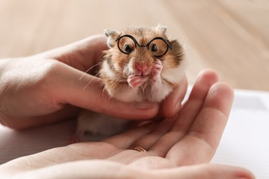 Owner holding cute little hamster with glasses, closeup
