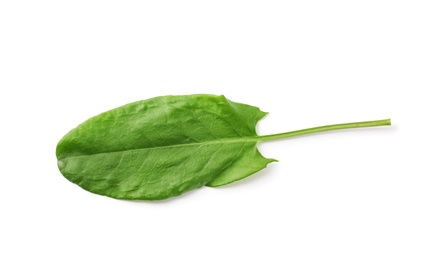 Fresh green single sorrel leaf isolated on white, above view