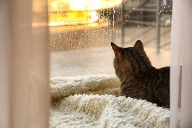 Cute tabby cat near window at home on rainy day. Space for text