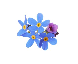 Delicate blue Forget-me-not flowers on white background