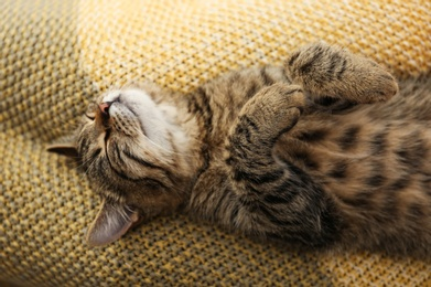 Cute tabby cat lying on knitted blanket, closeup. Lovely pet